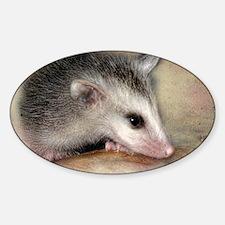 PossumLove Sticker (Oval)