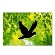 bird flying freedom c Postcards (Package of 8)