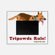 Tripawds Rule Running GSD White BKG Picture Frame