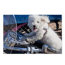 Gus Riding Shotgun Postcards (Package of 8)