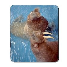 (12p) 2 Walrus Mousepad