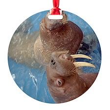 (12p) 2 Walrus Ornament