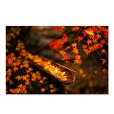Autumn Maple Postcards (Package of 8)