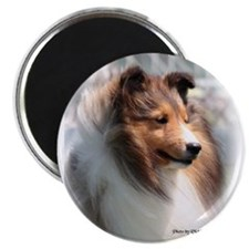 Unique Shetland sheepdog Magnet