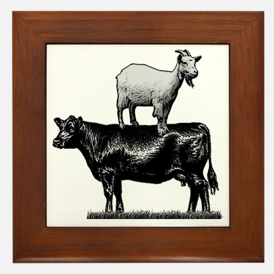 Goat on cow-1 Framed Tile