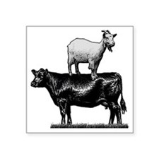 """Goat on cow-1 Square Sticker 3"""" x 3"""""""