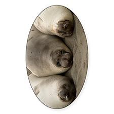(9) we 3 seals Decal