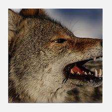 coyote vole portrait Tile Coaster