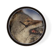 coyote vole portrait Wall Clock