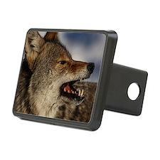 coyote vole portrait Hitch Cover