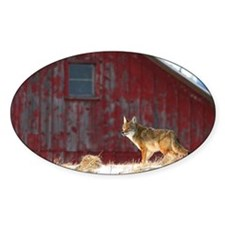 coyote barn Decal