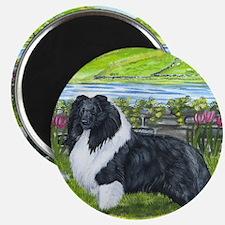Bi Black Sheltie Magnet