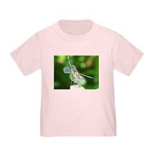 Dragonfly T