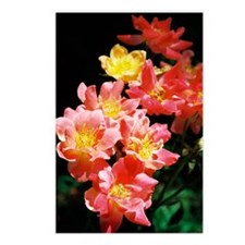 greeting card joseph rose Postcards (Package of 8)