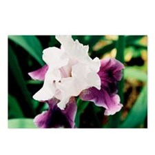 greeting card purple and  Postcards (Package of 8)