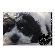 cockapoo Postcards (Package of 8)