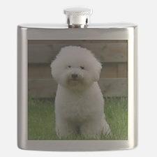 bichon-frise-0126 Flask