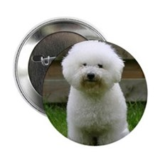 "bichon-frise-0126 2.25"" Button"