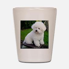 bichon-frise-0043 Shot Glass