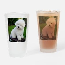 bichon-frise-0043 Drinking Glass