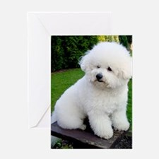 bichon-frise-0043 Greeting Card