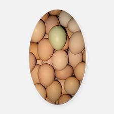 Eggs Oval Car Magnet