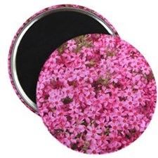Tiny Pink Flowers Magnet