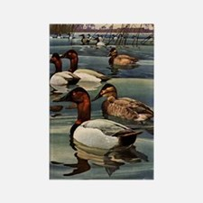 FIN-canvasback-duck-GREETCD Rectangle Magnet