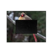 Female Cardinal 2 Picture Frame
