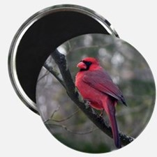 Male Cardinal 2 Magnet
