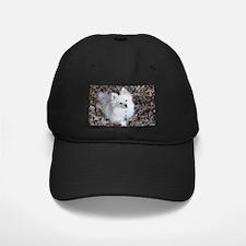 Pomeranian on Baseball Hat