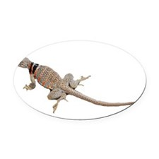 collared lizard copy Oval Car Magnet