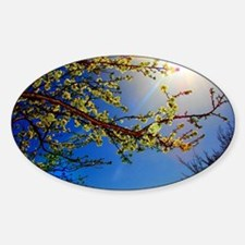 burst of tranquility-watermarked Decal