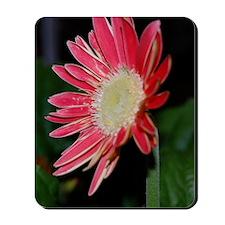 barnredflower Mousepad