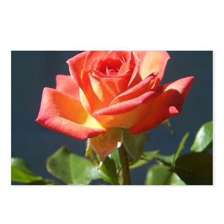 rose 10x10_apparel Postcards (Package of 8)