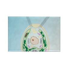 Chlamydomonas Rectangle Magnet
