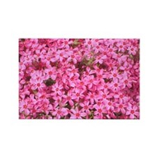 Tiny Pink Flowers Rectangle Magnet