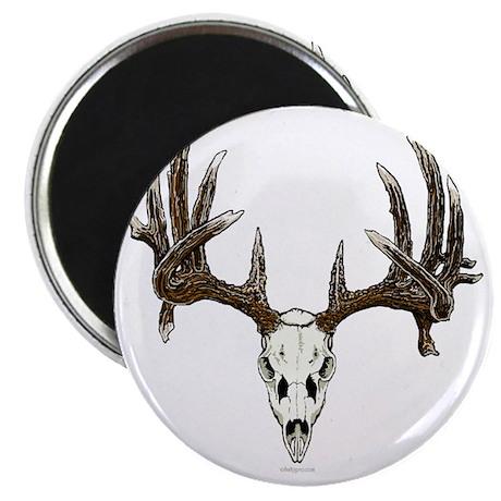 whitetail deer skull, illustration Magnet