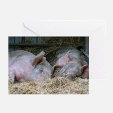 2 Sleepy Pigs Greeting Cards (Pk of 10)