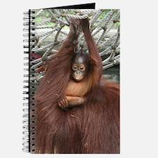 zoolander Journal