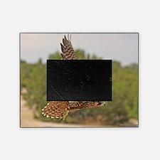 Peregrine Falcon Picture Frame
