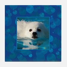 American Eskimo Dog Tile Coaster