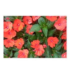 Flower Trap Postcards (Package of 8)