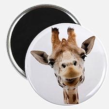 Giraffe Face New Profile Magnet