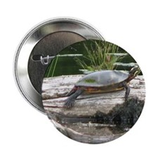 """Painted Turtle 2.25"""" Button"""