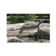 Painted Turtle Rectangle Magnet