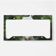 IMG_8714 License Plate Holder