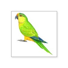"peach-fronted parakeet Square Sticker 3"" x 3"""
