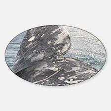IMG_0167 Sticker (Oval)