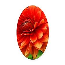 Orange Dalia Oval Car Magnet